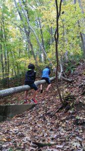 トモエの森の中
